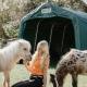 Unterschlupf für alle Pferderassen - egal ob klein oder groß